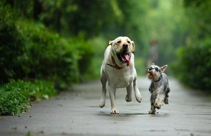 宠物拍照APP开发 为宝贝拍出一张满意的照片