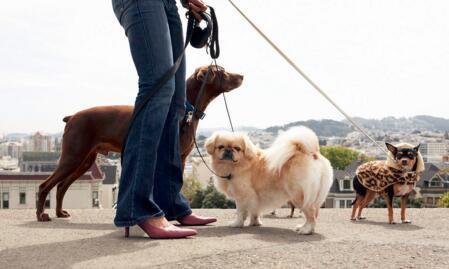 遛狗APP开发 让狗狗更开心