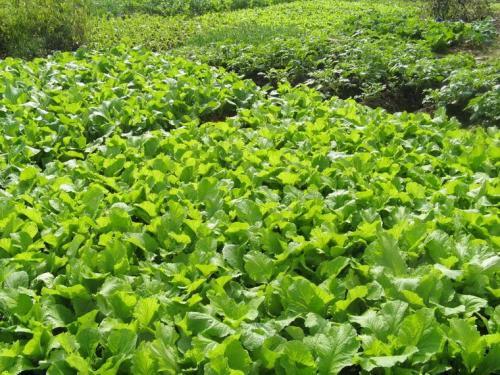 蔬菜种植软件开发于农民而言意义是什么