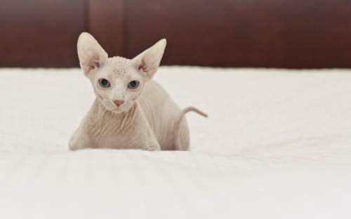 开发宠物APP重新定义宠物生活