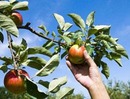 水果采摘APP开发 任摘任吃