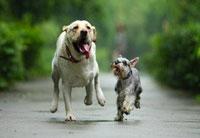 宠物管家APP开发  覆盖宠物日常生活