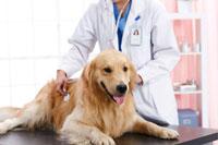 犬类防疫证APP开发 开启文明养犬时代