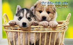 宠物健康管理APP开发 让生活更美好