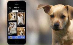 宠物电商APP开发 都市人的孤独经济