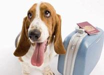 宠物托运APP开发 为用户提供便捷服务