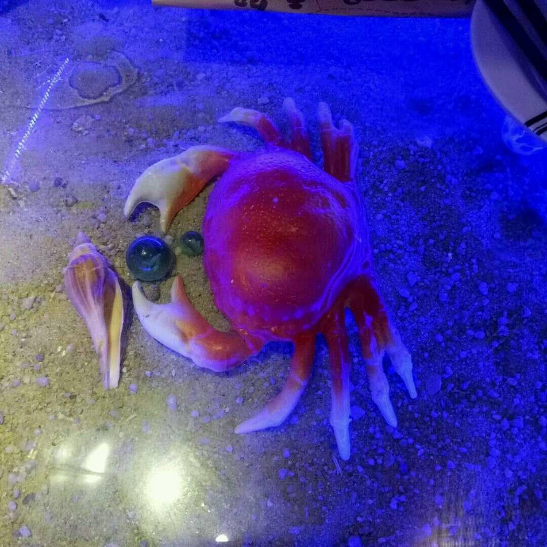 """广州app公司""""虾与蟹""""的碰撞"""
